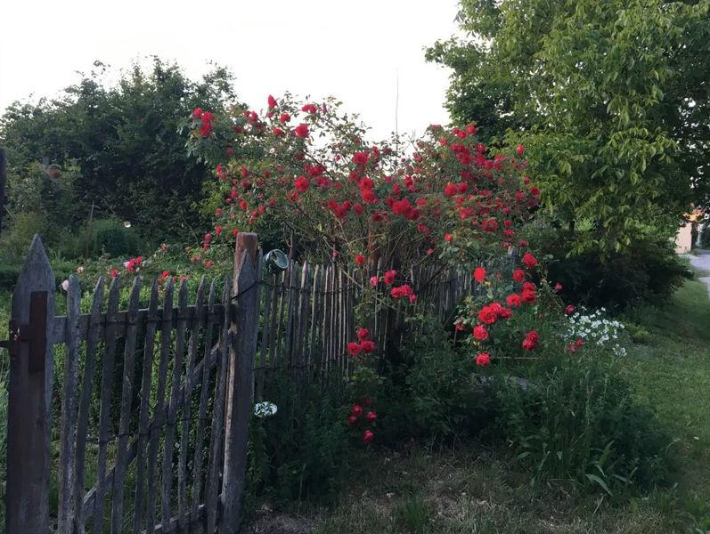 Lagenser Gärten - BUND und schön – im Garten von Familie Brinkmann-Roitsch