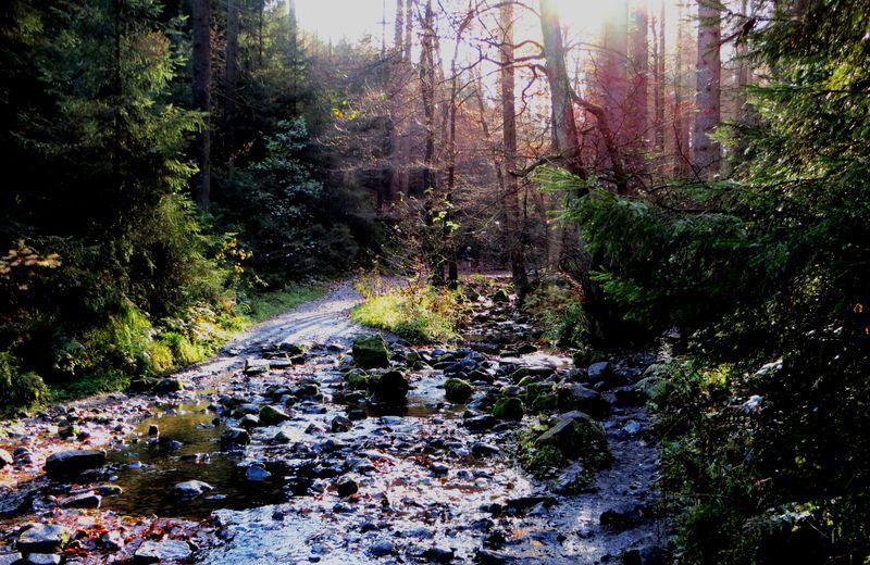 Forstlicher Eingriff bedroht Silberbachtal